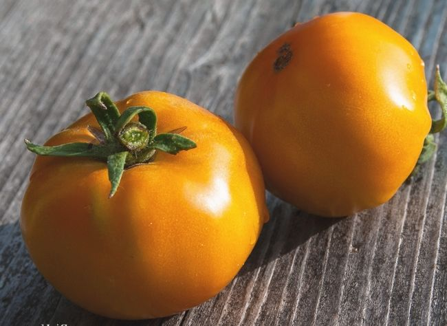 Raznolikost persimmon paradajza