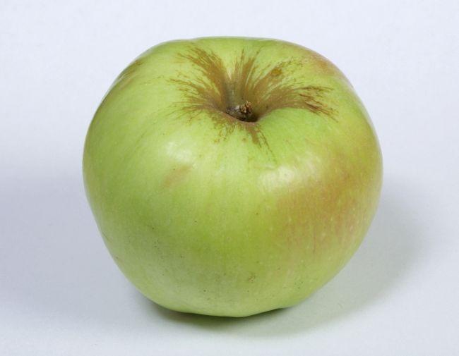 Razne zimske jabuke Bogatyr