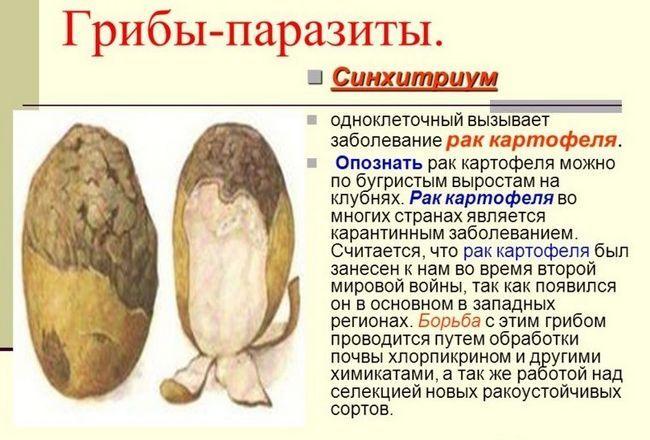 cancer de cartofi