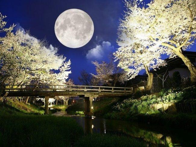 Лунный календарь садовода-огородника