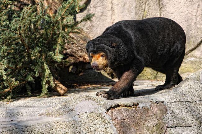 Zar to nije pomalo kao Shar-Pei? Ovaj dodatni kože - efikasno sredstvo iz čeljusti lavova i tigrova.