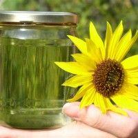 Olejnatá semena, jejich význam a typy
