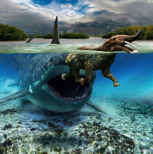 Мегалодон охотился на морских животных.