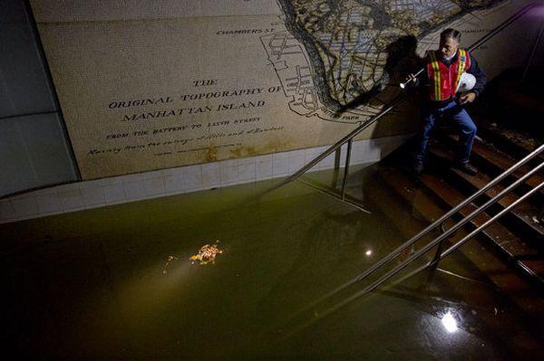 Метро нью-йорка стало могилой для миллиона утонувших там крыс