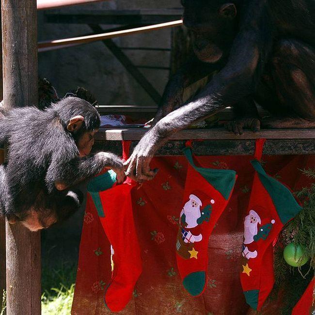 Božić dolazi do zoološkim vrtovima