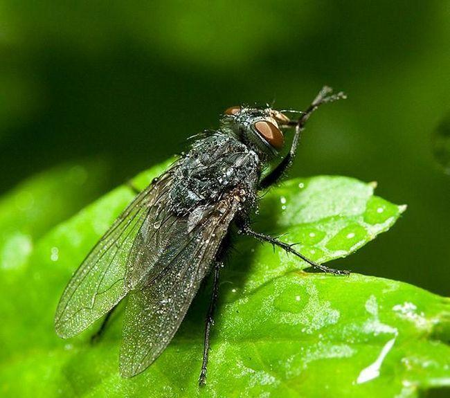 после контакта с человеком муха всегда моет лапки - кто из нас грязный?