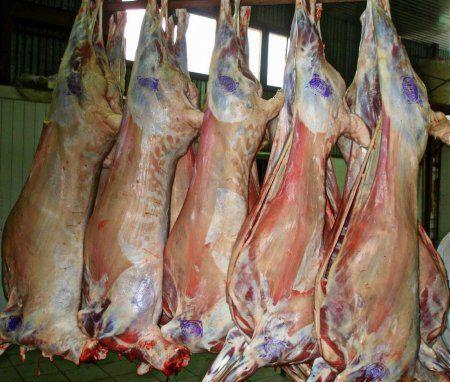 Mäso plemien oviec