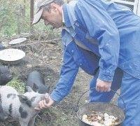 Vijetnamski svinjskog mesa