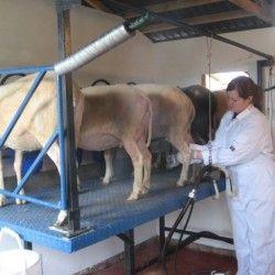Prinos mlijeka ovaca