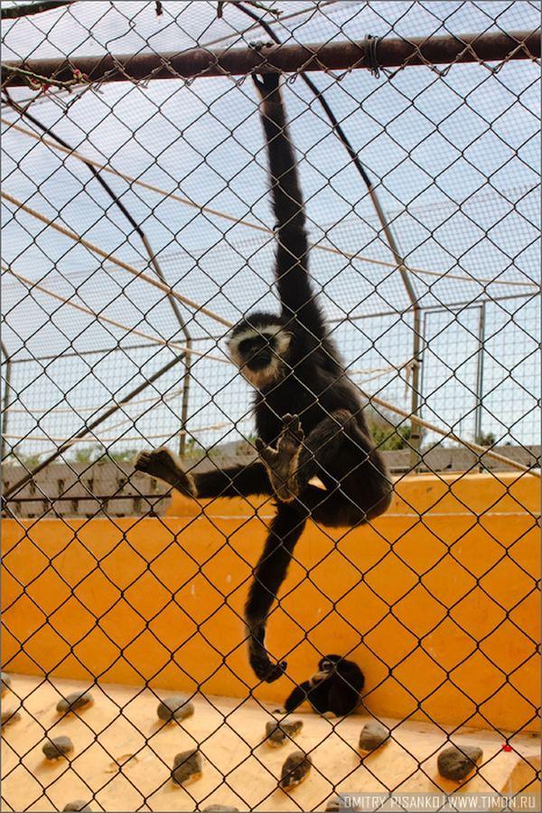 Monkey Park, Kanárské ostrovy