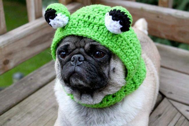 Mops - smiješno pas.