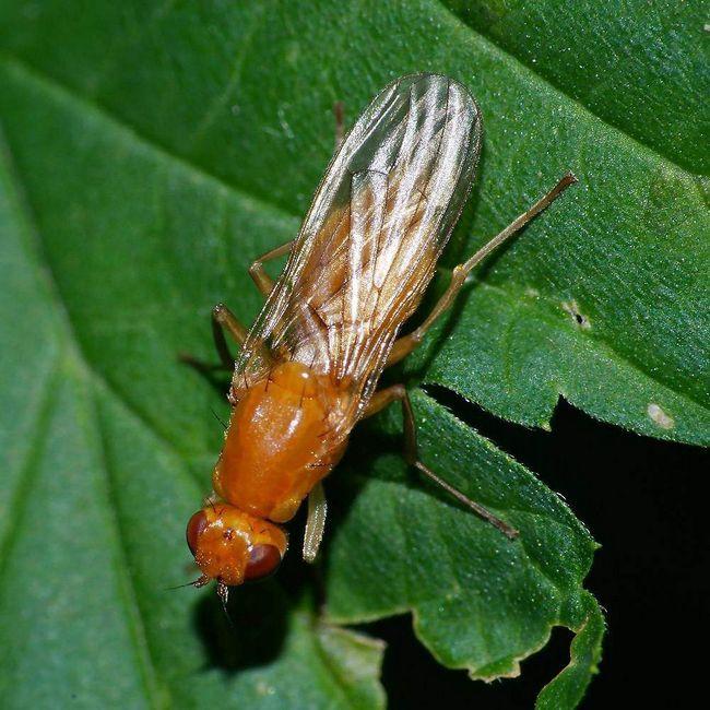 Личинки морковных мух стойкие к холодам.
