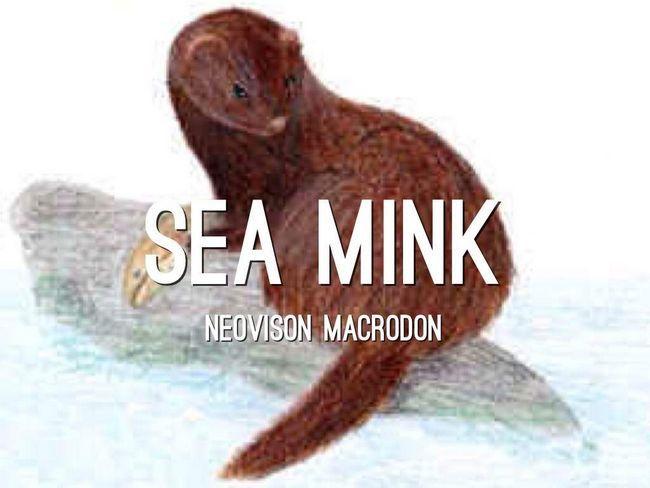 Морские выдры вели ночной образ жизни и были хищниками.