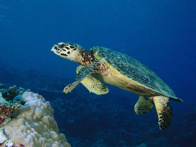 Morske kornjače - svaštojedi.