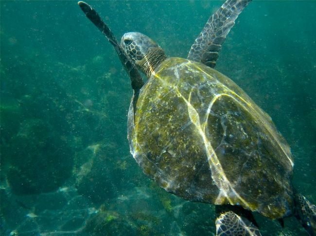 Morske kornjače nemilosrdno uništio krivolovaca.