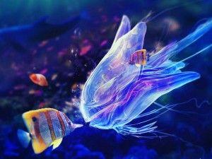 виды морских аквариумов