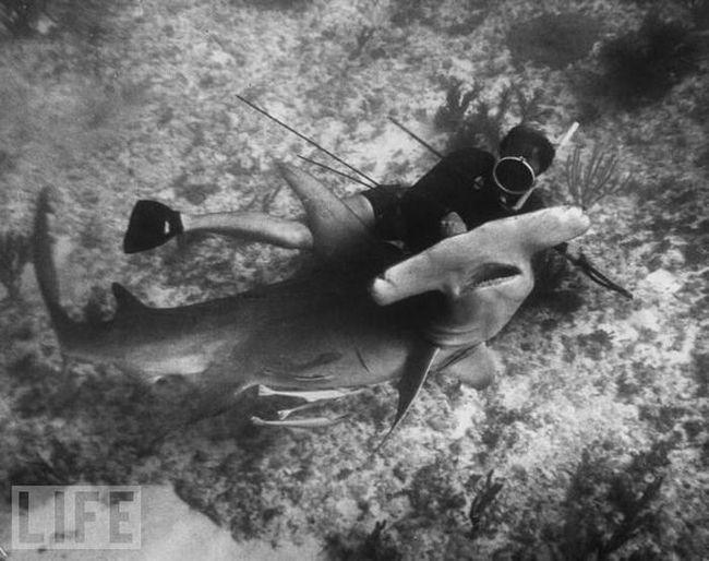 Для человека акулы – это олицетворение мощи, величины, силы, угрозы, дикости и ярости.