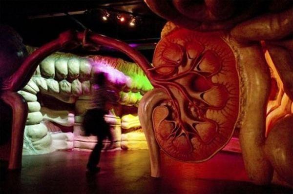 ljudsko tijelo CORPUS muzeja u Holandiji