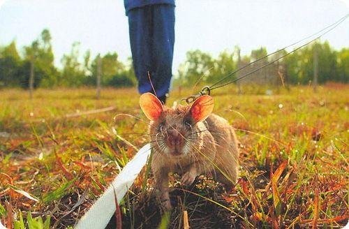 Мыши идут на работу в службу безопасности