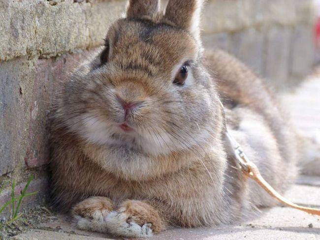 На Алтае кролик напал на девочку и покусал ее.