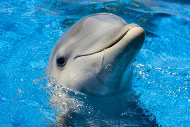 Delfin spasili iPhone.