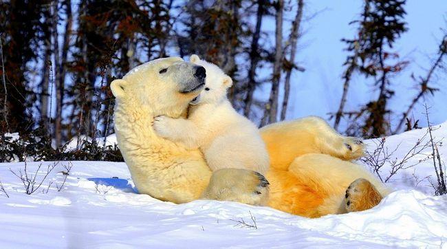 Odakle mu je majka medvjed je nepoznat, ali najvjerovatnije da je bila žrtva krivolovaca.