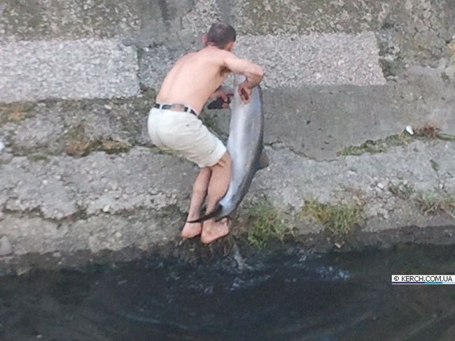 U Kerch građanin spašeni delfin