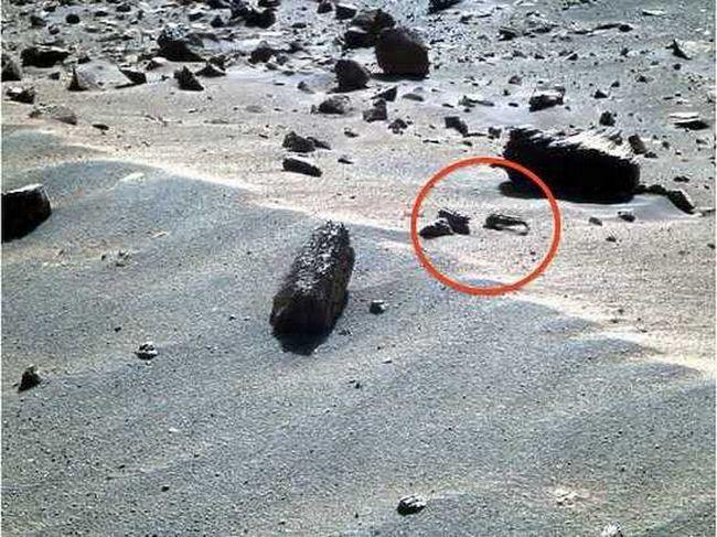 Na Marsu, pronašao škampi i škorpiona.