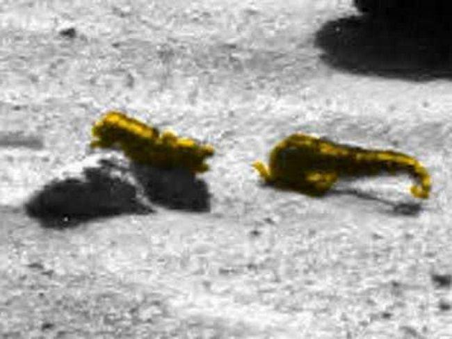 Razgovor između dva Marsovci: prema NLO istražitelja Scott Waring, ova dva stanovnika Marsa razmjene međusobno nikakve informacije.