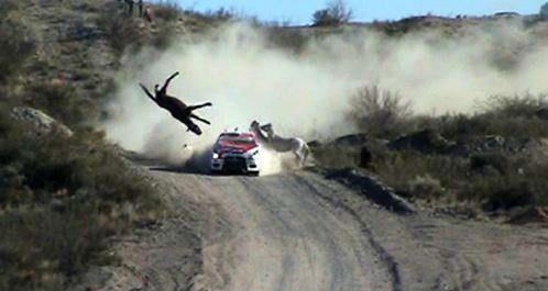 Tokom relija u Argentini Road Racer smanji krdo divljih konja.