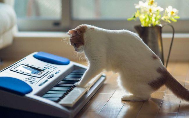 Pismeni muziku za mačke.