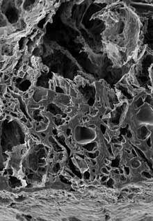 Вакцина-имплантат вылечила мышей от рака