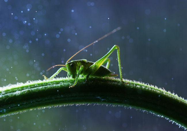 Insekata u closeup Vadim Trunov