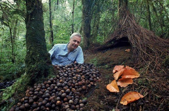 Prirodnjak, direktor, voditelj, scenarist, pisac - Sir David Frederick Attenborough