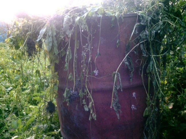 Натуральные удобрения для огорода своими руками. Полезные советы.