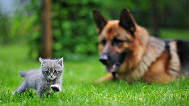 Tito psi se vyznačují šetrnost vůči jiné zvíře.