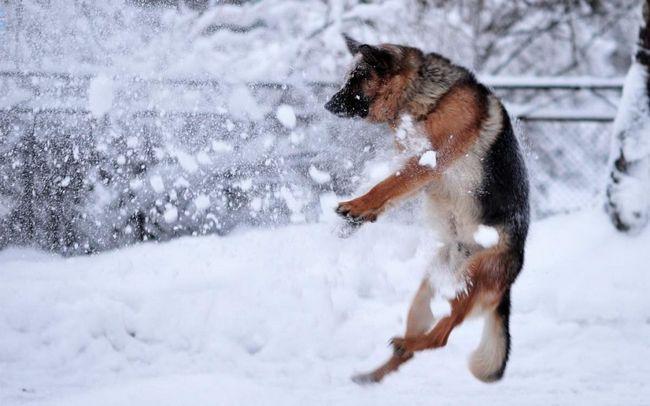 Tito psi jsou velmi aktivní.