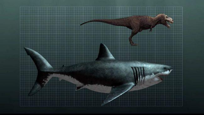 Размеры мегалодона в сравнении с динозавром.