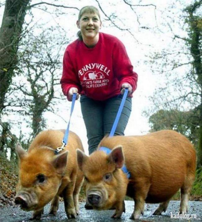 Dekorativni svinje - još jedan neobičan izbor za one koji vole egzotike.