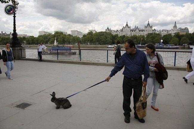 hodanje zeca na gradskoj rivi.