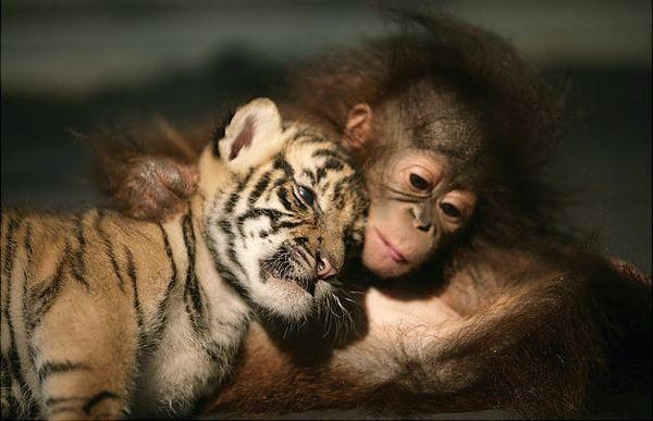 Необычные пары в мире животных