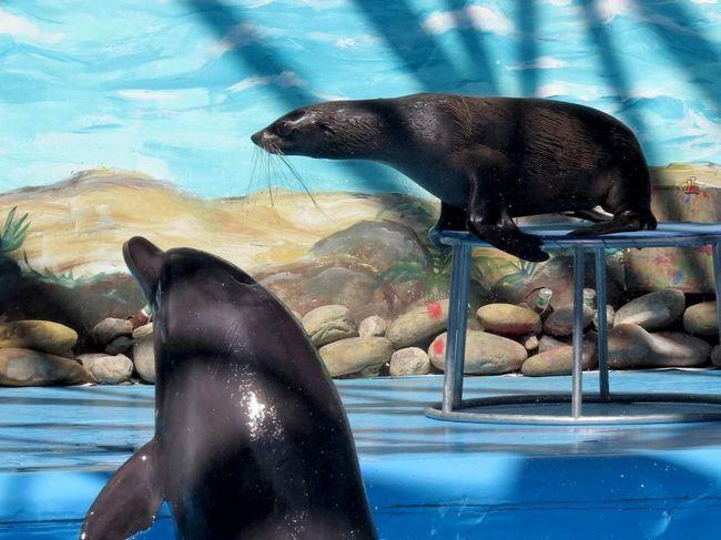 Dolphins - jedan od najinteligentnijih sisavaca na planeti.