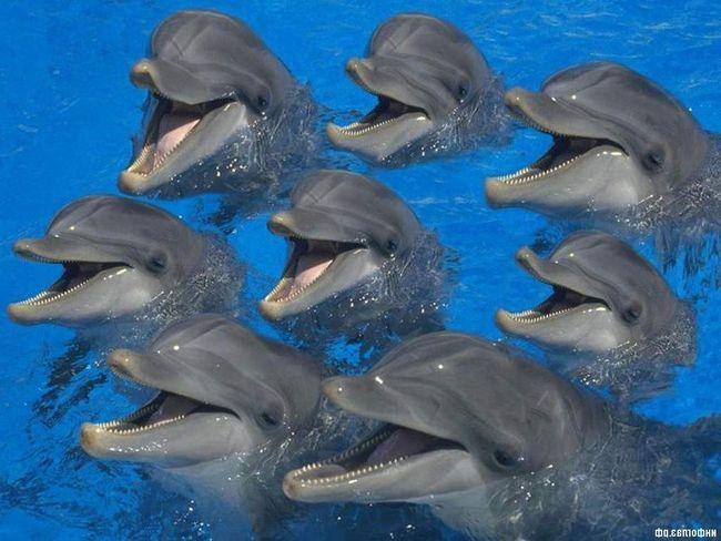 Dolphins - učestvovao u mnogim predstavama.