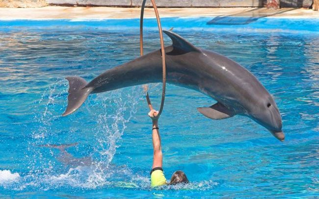 I delfini, i pečata - oba životinje imaju visoku inteligenciju.