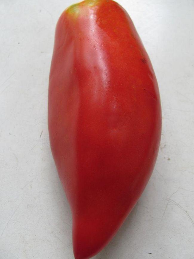 Paradajz sorte crveni fang
