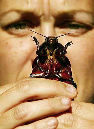 Ночные обжоры - тараканы