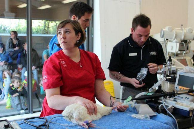 Novi Zeland veterinari spasili bijele kivi