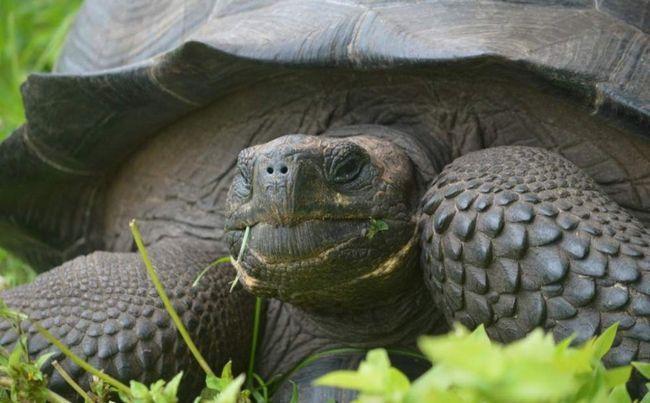 Nova vrsta kornjača pronađena u Galapagos.