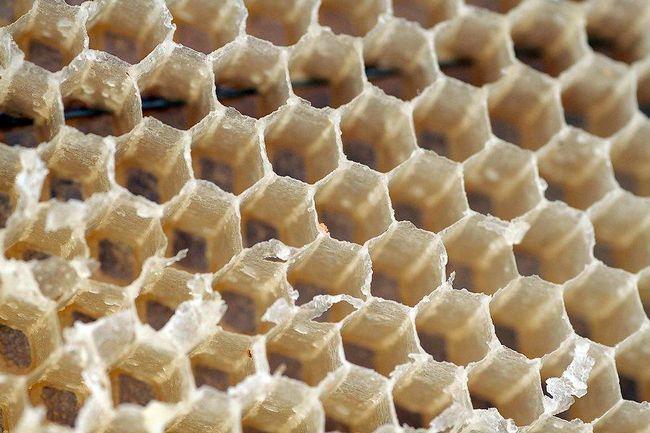 Na včelín a včiel (Part 1)