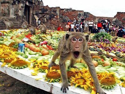 Tradiční hody Opice v Lopburi, Thajsko